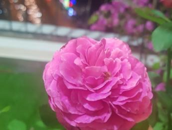 Hoa mới